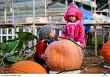 Khám phá vườn bí ngô khổng lồ và cà chua đen ở Đà Lạt