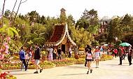Đà Lạt điểm du lịch hót nhất Tết Đinh Dậu