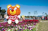 Tour Du Lịch Festival Hoa Đà Lạt 3 Ngày 2 Đêm Từ TP. Hồ Chí Minh