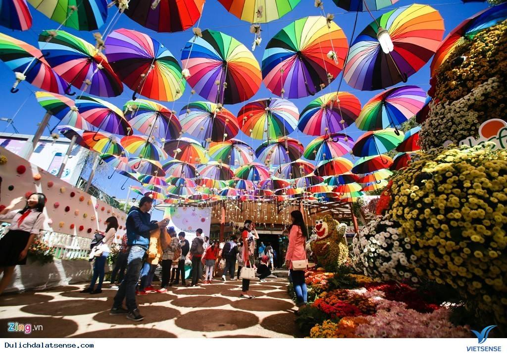 Đà Lạt Rực Rỡ Trước Ngày Khai Mạc Festival Hoa 2015