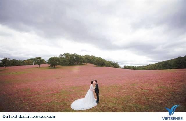 Đồng cỏ hồng Đà Lạt làm say lòng du khách