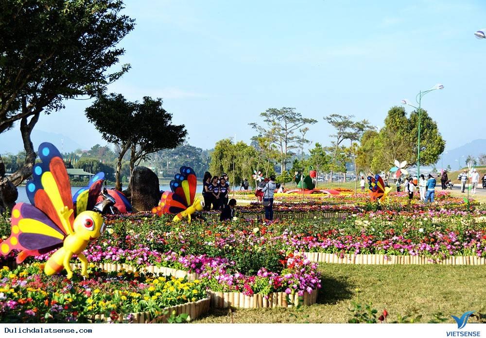 Festial Hoa Đà Lạt 2015 – Điểm Nhấn Đặc Biệt Nhất Của Du Lịch Đà Lạt,festial hoa da lat 2015