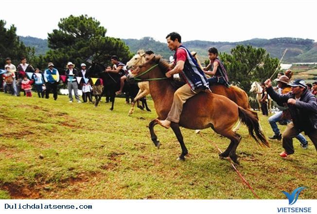 Một Ngày Du Ngoạn Cảnh Đẹp Đà Lạt Bằng Xe Ngựa